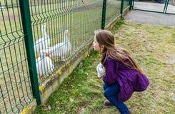Mała dziewczynka stawia out jęzor gooses Szturchać niedźwiedzia fotografia royalty free