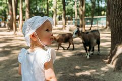Mała dziewczynka w białej sukni i białym kapeluszu w zoo na tle kózki obraz stock
