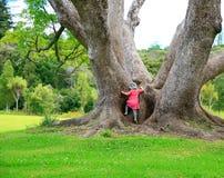 Mała dziewczynka wspina się wielkiego drzewa Zdjęcie Royalty Free