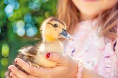 Mała dziewczynka z wiosny kaczątkiem Drób w rękach c obraz royalty free