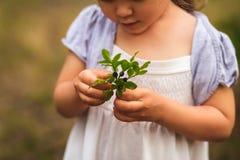 Mała dziewczynka zbiera czarne jagody w lesie fotografia stock