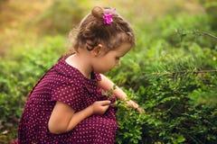 Mała dziewczynka zbiera czarne jagody w lesie obraz royalty free