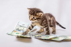 Mała figlarka blisko dolarów Odliczający przychody, zysk od busine zdjęcie stock