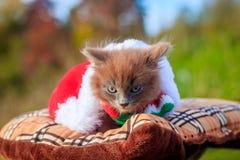 Mała figlarka na spacerze z koloru szalikiem, bożymi narodzeniami kapeluszowymi i Figlarka chodzi pet Puszysty dymiący kot z ostr obraz stock