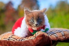 Mała figlarka na spacerze z koloru szalikiem, bożymi narodzeniami kapeluszowymi i Figlarka chodzi pet Puszysty dymiący kot z ostr zdjęcie stock
