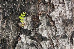 Mała gałąź na barkentynie Fotografia Stock
