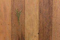 Mała gałąź na drewnie Zdjęcia Royalty Free