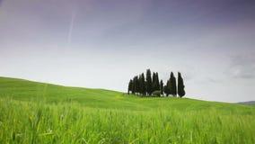 Mała grupa cyprysy przeciw zielenieje pole zbiory