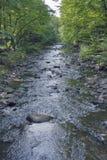 Mała halna rzeka w Carpathians Fotografia Stock