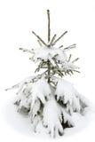 Mała jodła w śniegu zdjęcie royalty free