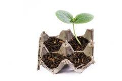 Mała kabaczek roślina zdjęcia royalty free