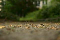 Mała kończyna na ziemi z rozmytym tłem Fotografia Royalty Free