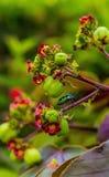 Mała kolorowa jaskrawa pluskwa na tropikalnym kwiacie obraz royalty free