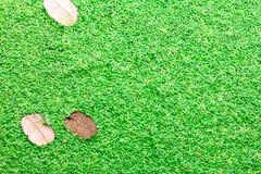 Mała liść zieleń Lemna nieletni tło Obrazy Stock