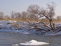 Mała mała rzeka w zimie Fotografia Stock