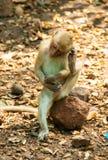 Mała małpa zdjęcia royalty free