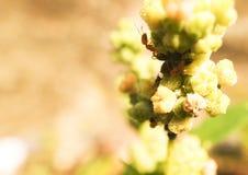 Mała mrówka bierze cukrowych kryształy zdjęcia royalty free