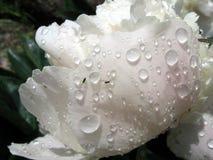 mała mucha pawilonu zagrać dwie krople deszczu Zdjęcia Stock