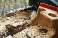 mała mysz zdjęcie stock