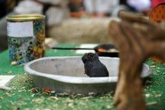 mała mysz fotografia stock