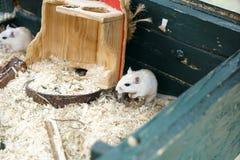 mała mysz obraz stock
