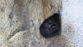 Mała mysz w norce w domu wśród kamieni, ilustracja wektor