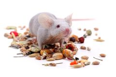 mała myszka obraz stock