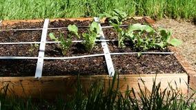 Mała Nastroszona łóżko ogródu fabuła Nawadnia zbiory wideo