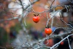 Mała owoc na wysuszonej gałąź Zdjęcie Stock