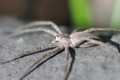 Mała pająk wiosna w lesie Fotografia Royalty Free