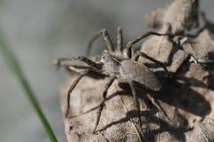 Mała pająk wiosna w lesie Zdjęcia Stock