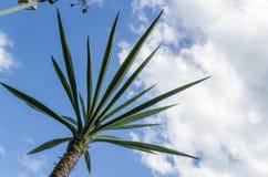 Mała palma fotografująca od dna, jasny niebo zdjęcia stock