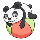 Mała panda bawić się piłkę Zdjęcie Royalty Free