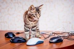 Mała pasiasta figlarka blisko komputerowych myszy Mnóstwo praca w zdjęcia royalty free
