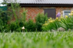 Ma?a pieczarka r?s? na zielonym gazonie przez od wioska domu Poj?cie: przeciwie?stwo wszystkie oczekiwania Selekcyjna ostro??, pl zdjęcie stock