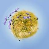 Mała planeta z błękitnymi cornflowers Zdjęcia Stock