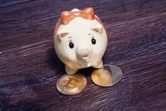 Mała prosiątko pozycja na dwa złotych crypto monetach Zdjęcia Stock