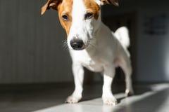 Mała psia pozycja na podłodze cienie na podłodze obrazy stock