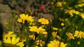 mała pszczoły dziewczyna kostiumowa latająca Obraz Royalty Free