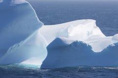 Mała ptasia duża góra lodowa Zdjęcia Stock
