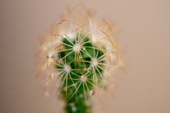 Mała roślina brać za kilka makro- fotografiach w obrazy royalty free