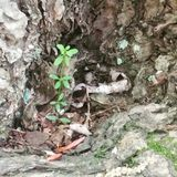 Mała roślina która mógł Obraz Stock