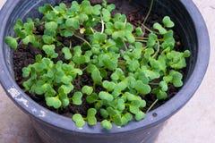 mała roślina na garnku Zdjęcie Royalty Free