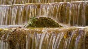 Mała roślina nad strumień siklawą w tropikalnej dżungli Zdjęcia Stock