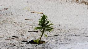 Mała roślina po deszczu obraz royalty free