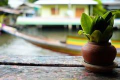 Mała roślina w Piec Glinianym garnku na Drewnianym stole Zdjęcia Stock