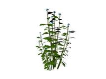 mała roślinnych Zdjęcia Stock