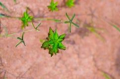 mała roślinnych Obraz Royalty Free