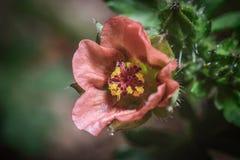 mała roślinnych Zdjęcie Stock
