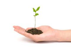 mała roślinnych ręce zdjęcia stock